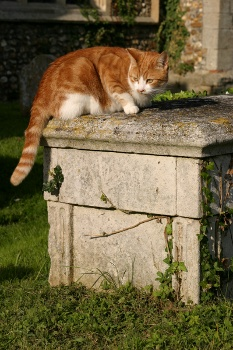 Cat sitting in the sunshine on a grave
